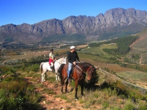 Paradise stable Franschhoek